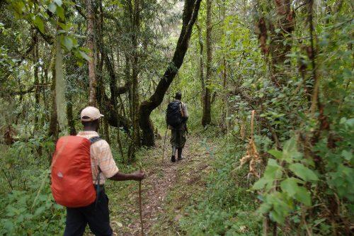 Hiking Across Bwindi Impenetrable Forest