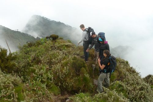 Primates Trekking & Volcano Hiking Safari