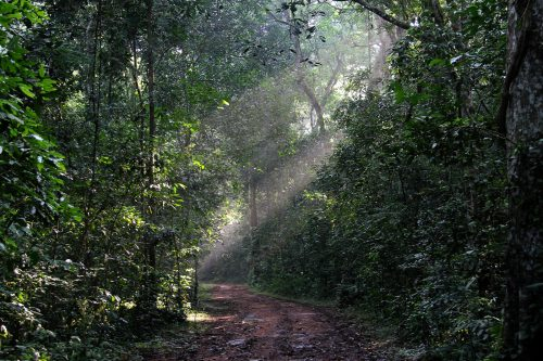 hiking in Kibale Forest Uganda