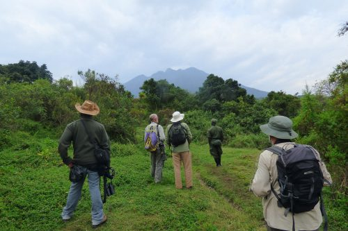 Walking Safari in Southern Uganda, Mgahinga Mutanda Walking Trail