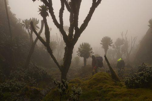 Trekking Rwenzori Mountains Safari in Uganda, Mount Stanley, Margarita Summit in Uganda