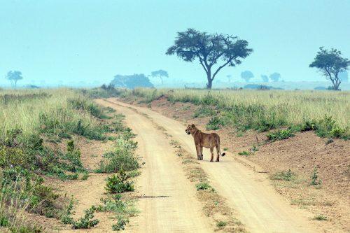 Explore Uganda Safari Trip