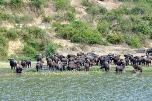 boat safari on Kazinga Channel