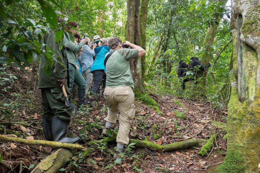 Gorillas, Volcanoes Trekking Safari (by raod), Walking Safaris
