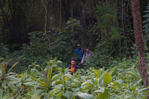 Trekking in Bwindi Impenetrable Forest
