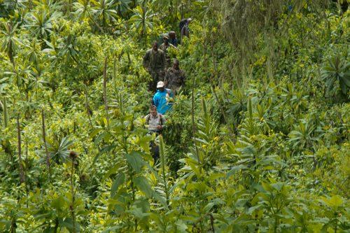 Descend Rwenzori mountains