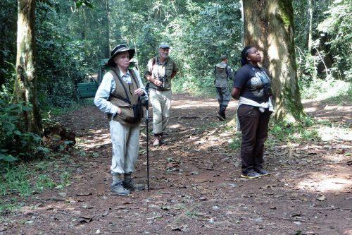 Kibale Forest, Classic Uganda safari