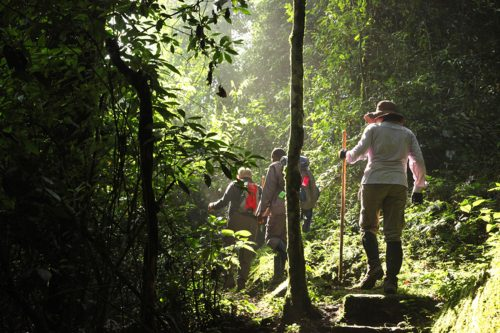 Trekking Rwenzoris, Gorillas & Wildlife Safari