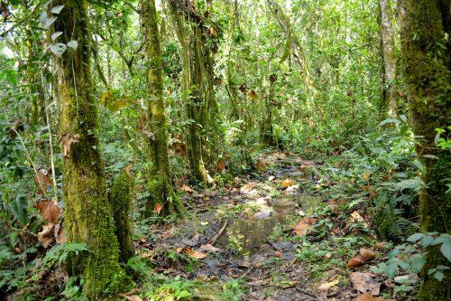 nature walks in kalinzu forest reserve