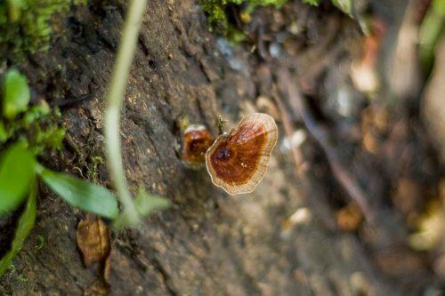 Trees and wildlife in kalinzu forest reserve