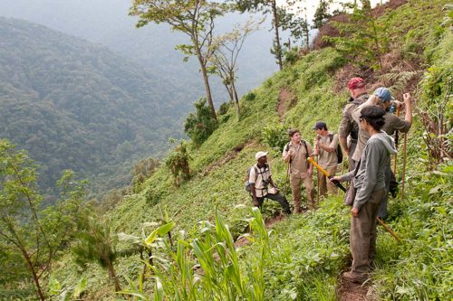 hiking walking safari in bwindi