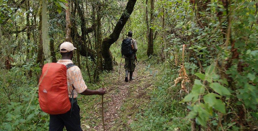 Nkuringo Walking Safari, hiking across Bwindi Impenetrable Forest